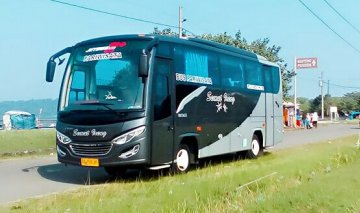 Medium Bus Semut Ireng Transport